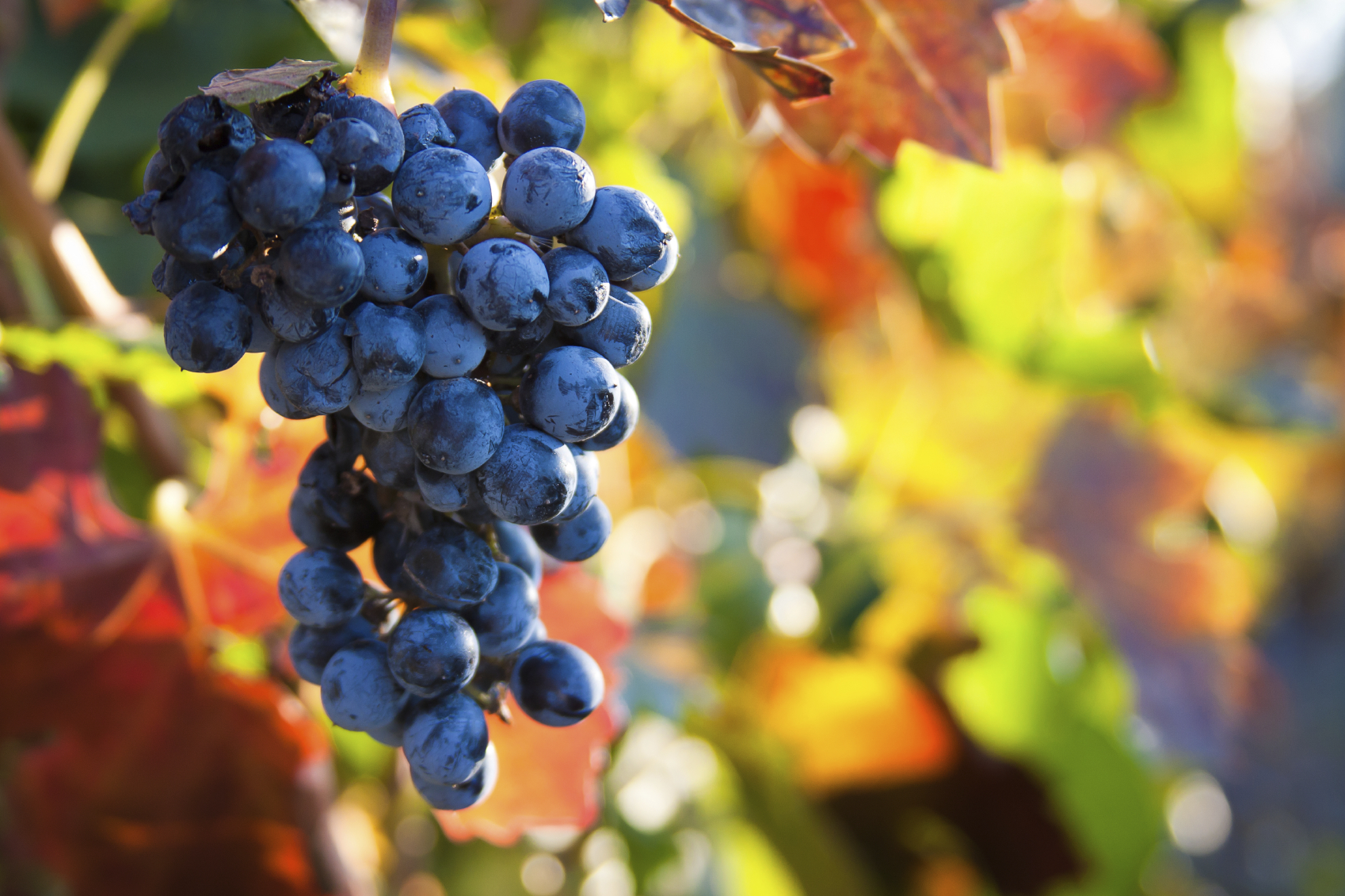 Fruit on the vine